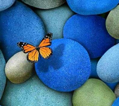 Hd Butterfly_21-1